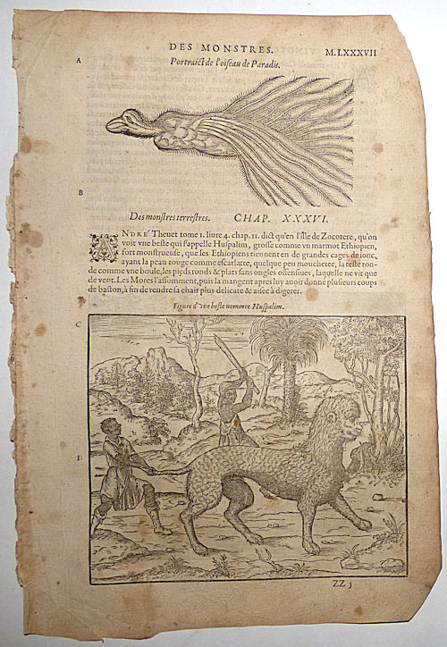 16th-century leaf with Illustrations of a Giraffe, a Bird of Paradise, and a Huspalim from Ambroise Paré's Monsters. Ambroise Paré.