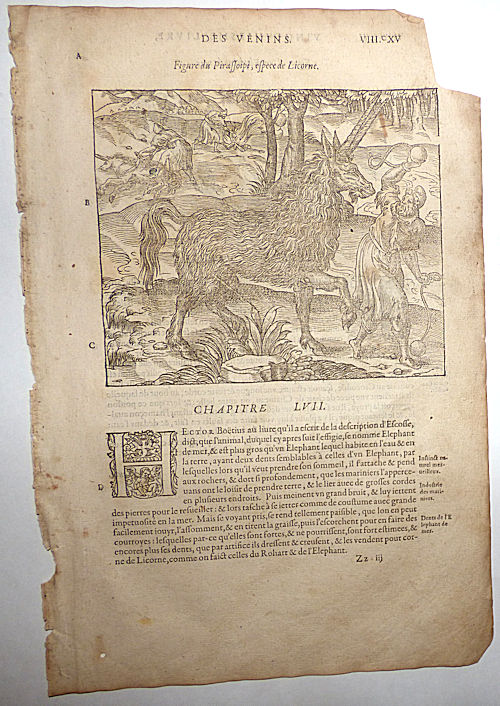 16th-century leaf with illustrations of a Pirassoipi (two-horned Unicorn) and a Sea Elephant from Ambroise Paré's Poisons. Ambroise Paré.