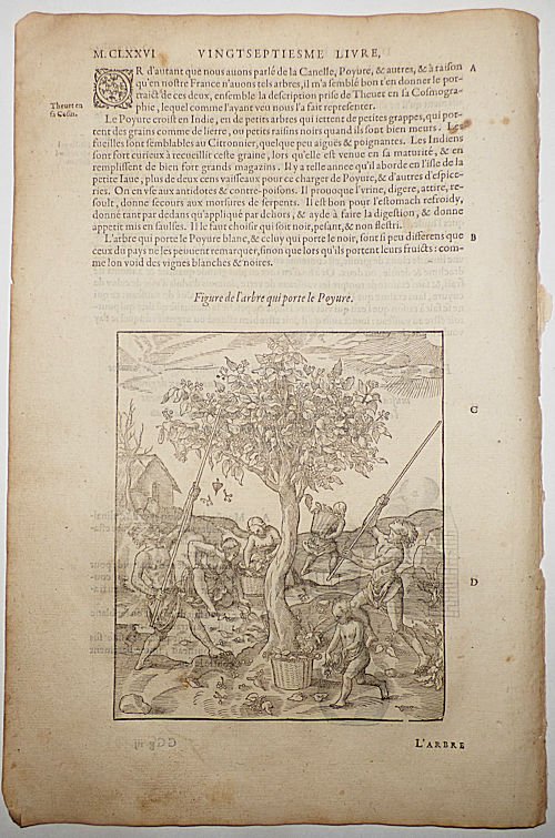 16th-century leaf with two illustrations, one showing the harvesting of white pepper and the other of a still from Ambroise Paré's Distillations. Ambroise Paré.