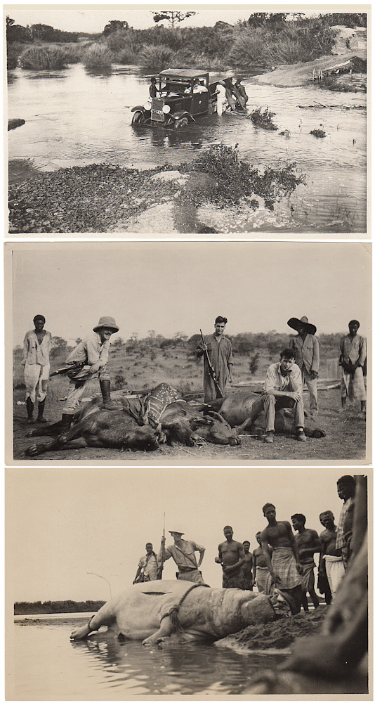 Group of 79 photographs documenting an Angolan safari by two American geologists who were traveling across Africa to Cairo from an academic conference that was held in Pretoria. either Ernest C. Roschen or Joseph T. Singewald.