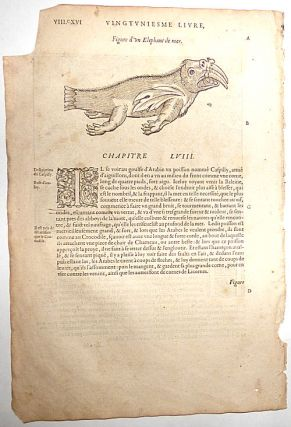 16th-century leaf with illustrations of a Pirassoipi (two-horned Unicorn) and a Sea Elephant from Ambroise Paré's Poisons