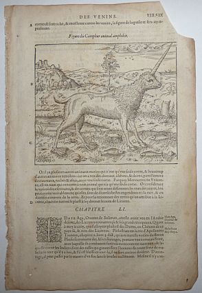 16th-century leaf with an illustration of a type of Unicorn known as a Camphur from Ambroise...