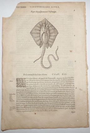 16th century leaf with an illustration of a Stingray from Ambroise Paré's Poisons