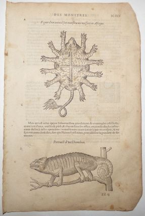 16th-century leaf with two illustrations, one of a chameleon and one of a turtle-like African beast from Ambroise Paré's Monsters