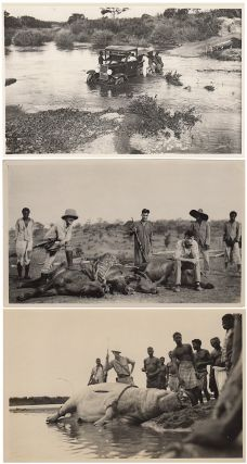 Group of 79 photographs documenting an Angolan safari by two American geologists who were...